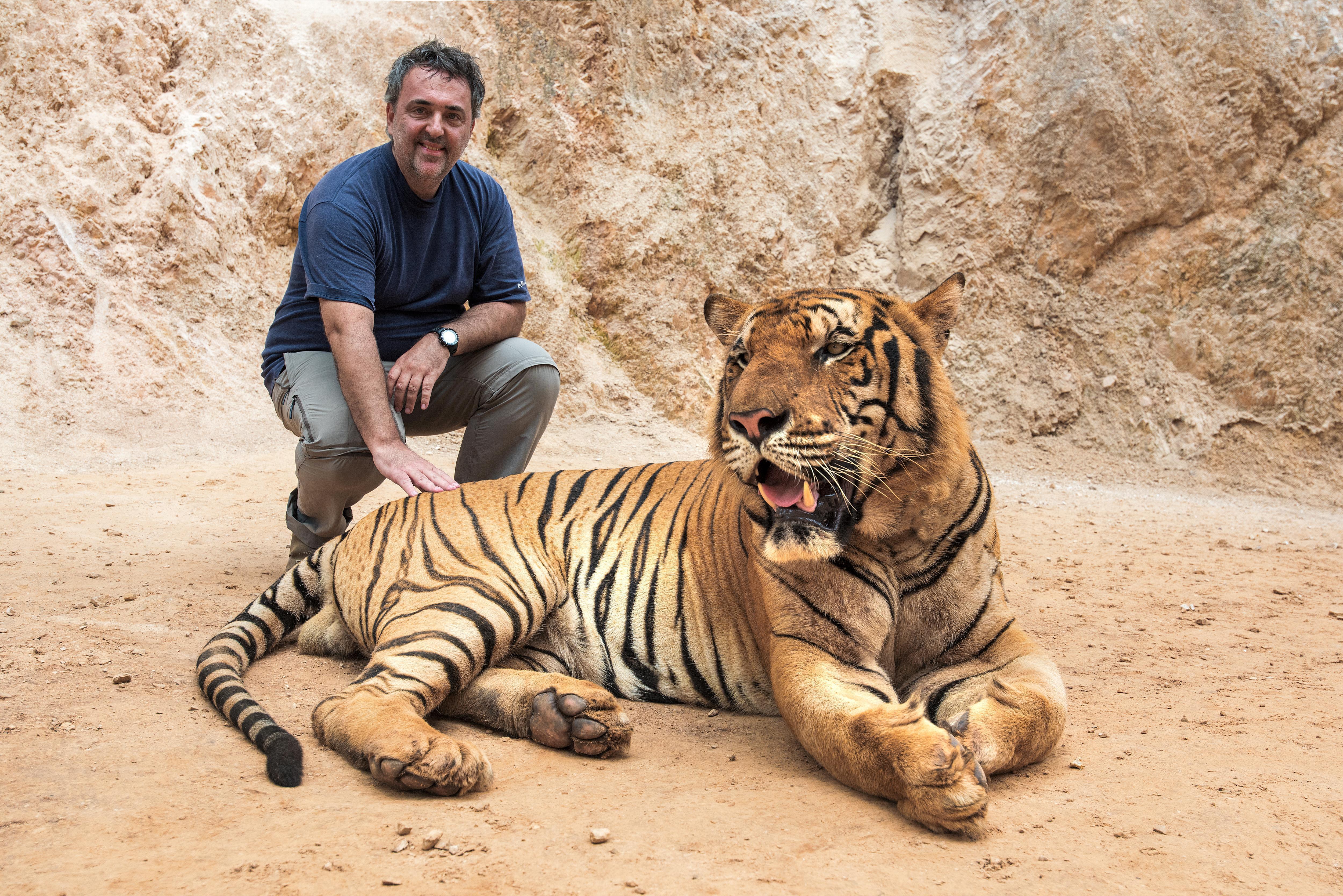 tajska_tigri