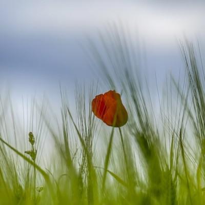 Toskana-pomlad-3