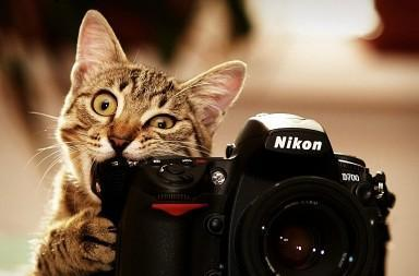cat_as_photographer_by_microkey