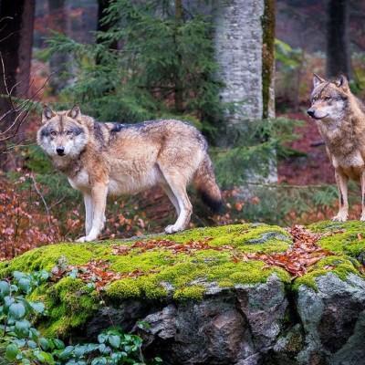 Bavarsko-gozd-izbor-4