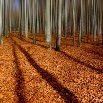 Bavarsko-gozd-izbor-83