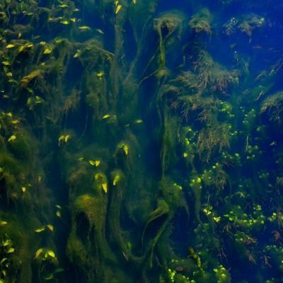 Ciril Bec: Vodni park